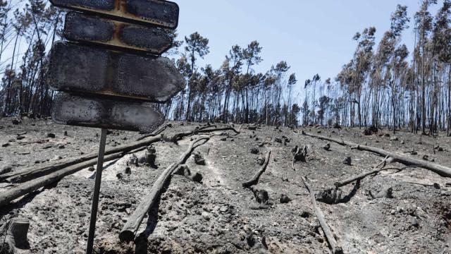 Marcelo promulga diploma sobre benefícios para gestão florestal