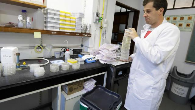 Cientistas testam resposta ao cancro com arte, música e gastronomia