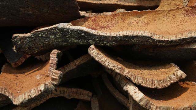 Exportações de cortiça sobem 4% até setembro
