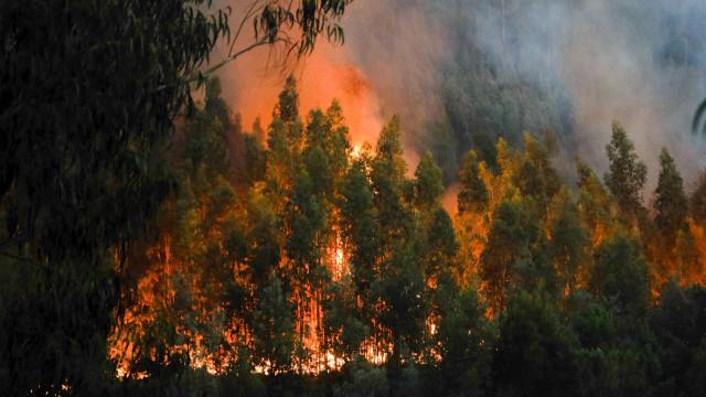 GNR detém suspeito de atear um dos grandes fogos de Oleiros