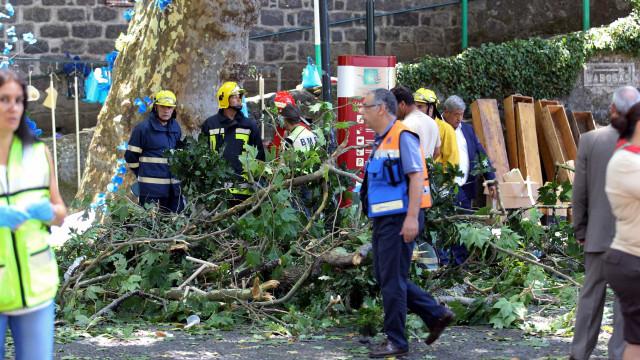 Queda de árvore na Madeira: 16 feridos permanecem internados no hospital