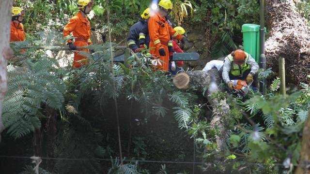 Um dos feridos na queda de árvore teve alta, cinco permanecem internados