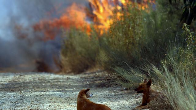 Há treze concelhos em risco máximo de incêndio