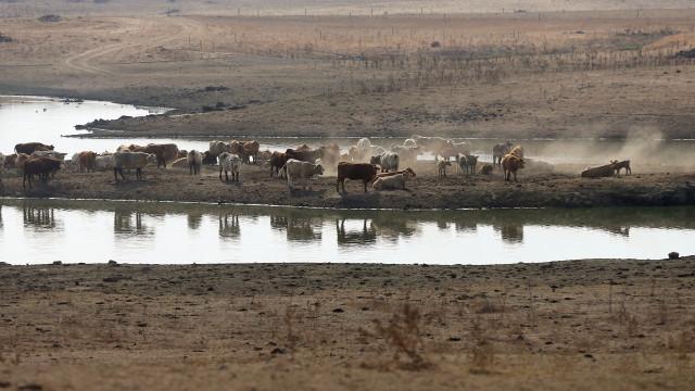 Aprovadas 1.591 candidaturas de 26 milhões de euros para minimizar seca