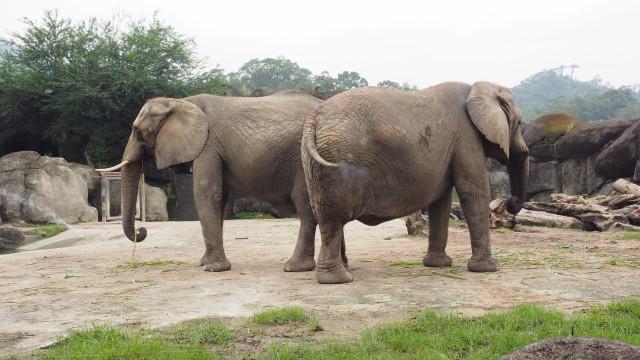 Dois turistas europeus morrem em safari na Zâmbia