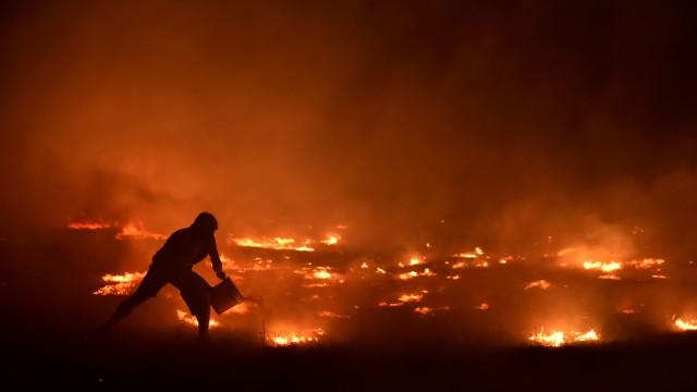 Alguns agricultores afetados por incêndios começam hoje a receber apoios