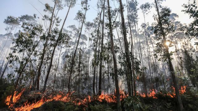 Governo propõe prémio para centrais de biomassa sem incêndios na região