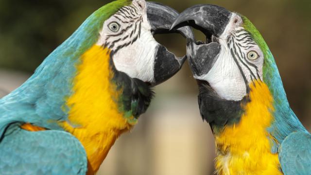 Ovos apreendidos a traficantes dão origem a aves exóticas no Zoo lisboeta