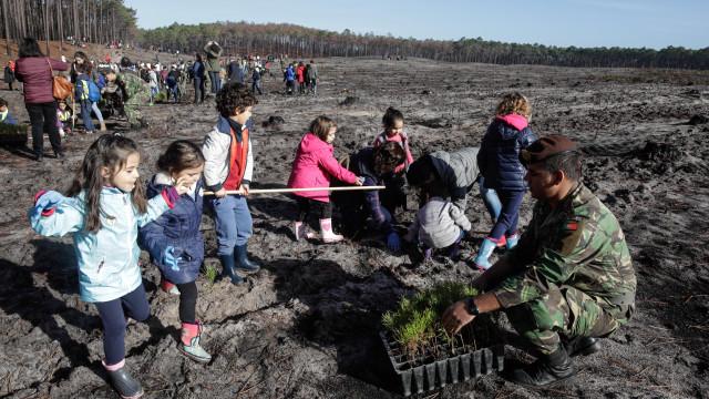 Mais de 270 mil árvores plantadas para recuperar floresta