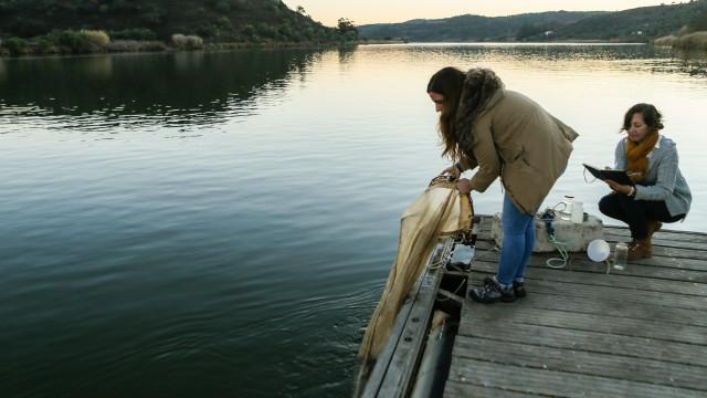 Água mais quente e salina no Guadiana é berço para espécies exóticas