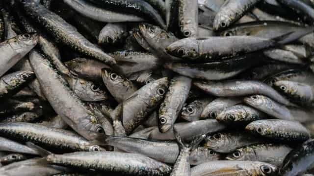 Pescadores vão receber 800 mil euros por suspensão de captura da sardinha