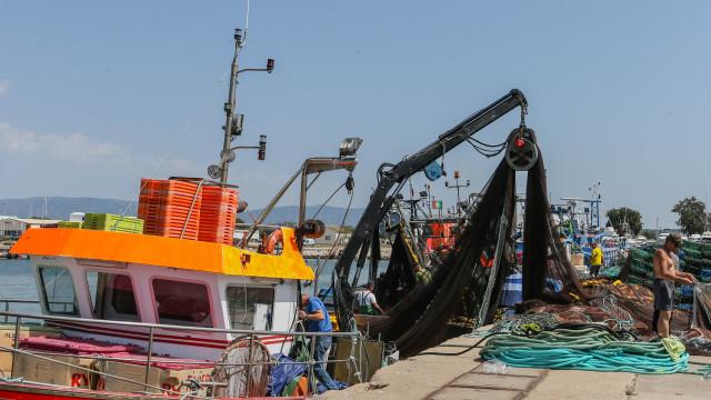 Bruxelas quer proibir pesca do bacalhau em águas nacionais