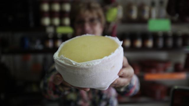 Produção do queijo da Serra da Estrela DOP atingiu as 195 toneladas