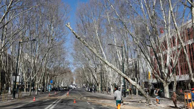 Autoridades cortam árvore onde embateu autocarro de turismo