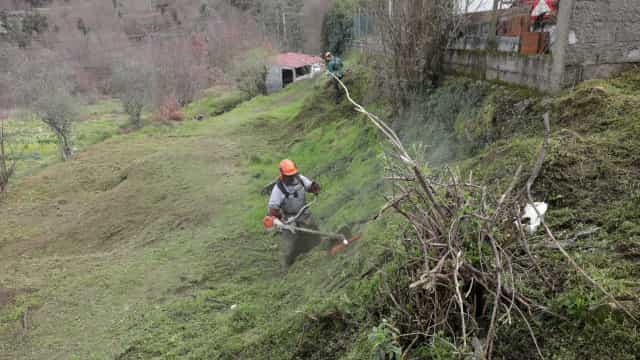 Arganil precisaria de 500 sapadores para cumprir lei da limpeza florestal