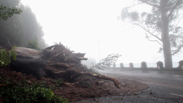 Proteção Civil registou 445 ocorrências até às 14h00 devido ao mau tempo