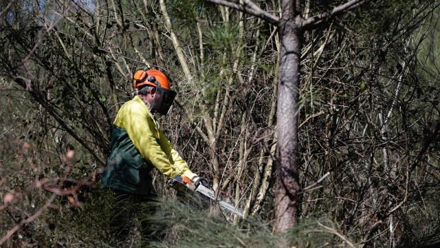 """Venda de madeira das matas ardidas """"correu menos bem"""", diz Governo"""