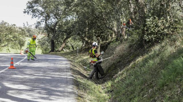 Proteção Civil alerta para burlas com coimas sobre limpeza de terrenos