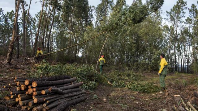 Produtores florestais pedem adiamento do prazo para limpeza de terrenos
