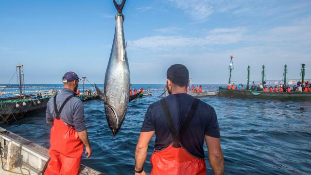 Moçambique acusa falta de transparência nas negociações da pesca de atum