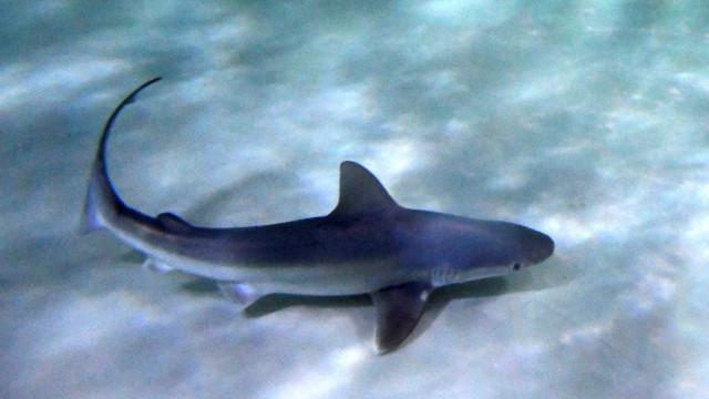 Autoridades apreendem 500 quilos de tubarões ameaçados de extinção