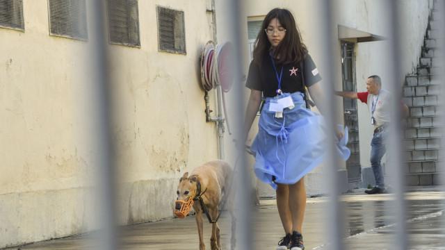 Macau: Ex-concessionária do canídromo paga multa por abandonar 532 galgos