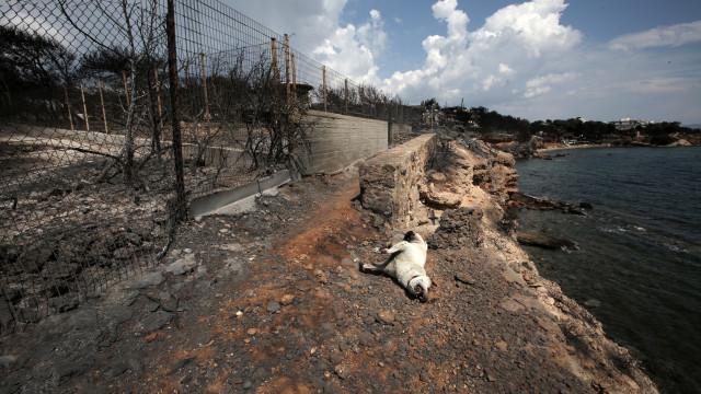 """Há """"indícios sérios"""" de atos criminosos nos incêndios da Grécia"""