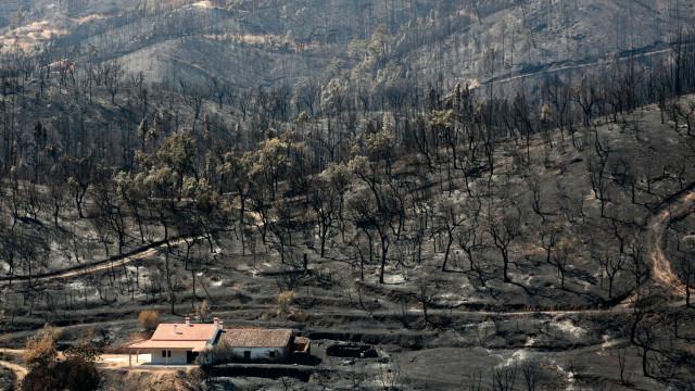 """Turismo em Monchique com esperança na regeneração da """"serra milagrosa"""""""