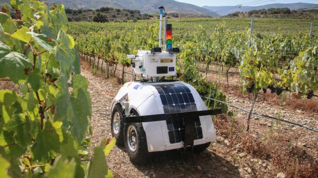 Investigadores testam robot para medir parâmetros da vinha
