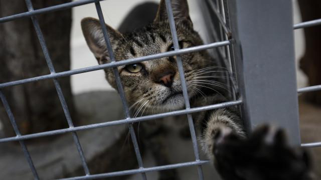 Veterinários: Proibição de abate nos canis põe em causa a saúde pública