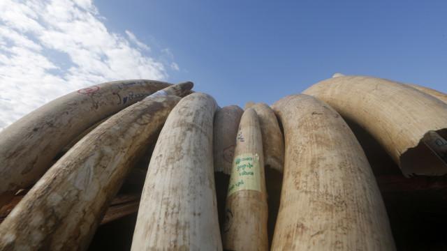 Polícia detém três homens na posse de marfim e pedras preciosas