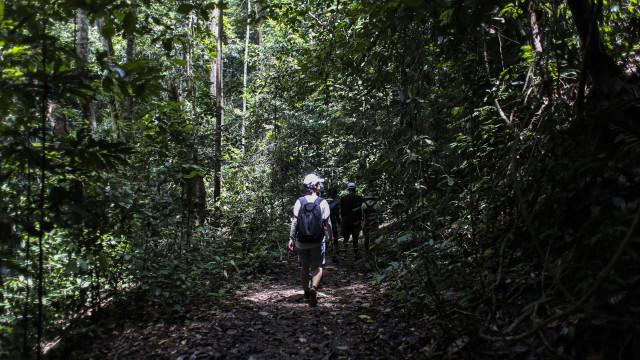 Não se deve contar muito com florestas para combater aquecimento global