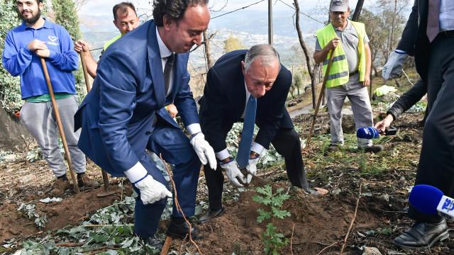 """Marcelo pede para se evitar aumento """"irreversível"""" de eucaliptos"""