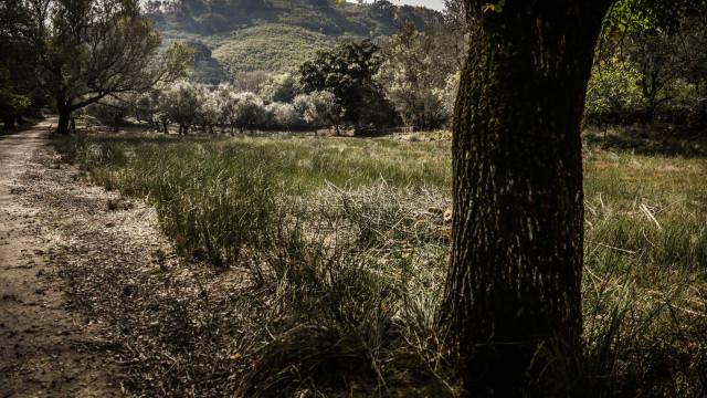 Sistema de vigilância de fogos já cobre 74% da floresta prevista