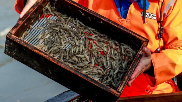 Governo moçambicano proíbe pesca de camarão nos próximos dois meses