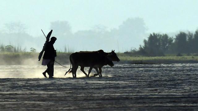 """Dezenas de pessoas mortas por grupos de """"proteção às vacas"""" na Índia"""