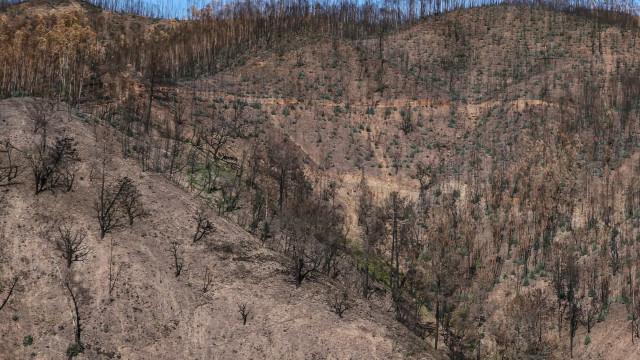 Autarca diz que arderam três mil hectares em Mação