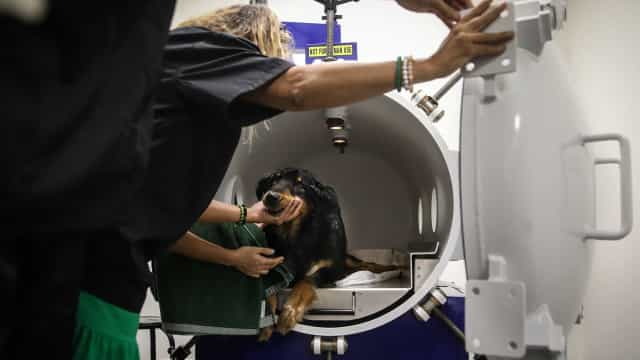 Tecnologia que prepara mergulhadores foi usada para ajudar cães e gatos