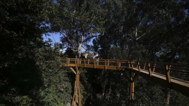 Serralves inaugura amanhã percurso elevado com 250 metros de comprimento