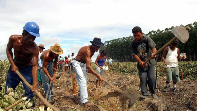 Negociatas políticas ameaçam preservação da floresta amazónica