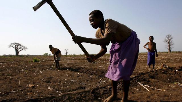 Moçambique usou 105 milhões do BAD para projetos de agricultura