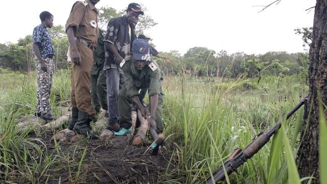 Angola com 'Lista Vermelha' de 150 espécies ameaçadas ou extintas