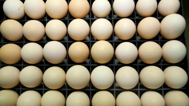 Ovos com pesticida tóxico identificados na Holanda não estão à venda cá