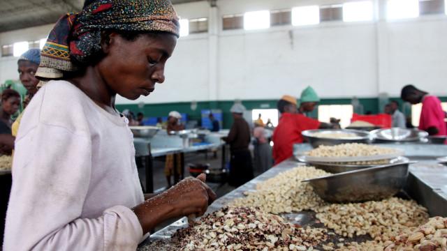 Vietnamitas vai comprar toda a castanha de caju produzida na Guiné-Bissau