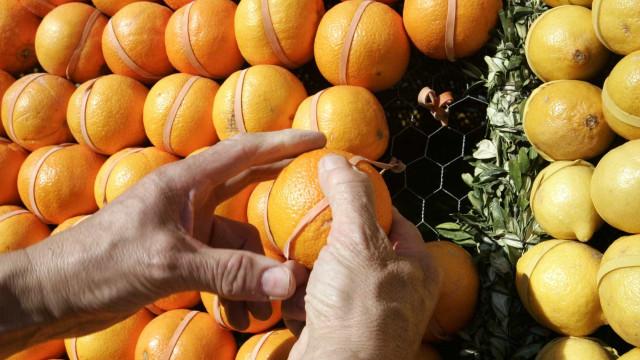 Produtores lançam organização para promover citrinos algarvios