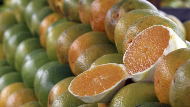 Organização quer suspender entrada na UE de citrinos da África do Sul