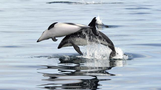 Ativistas protestam contra parque aquático depois da morte de 4 golfinhos