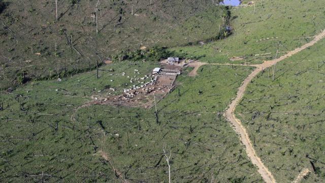 Governo brasileiro anuncia recuo de 16% na desflorestação da Amazónia