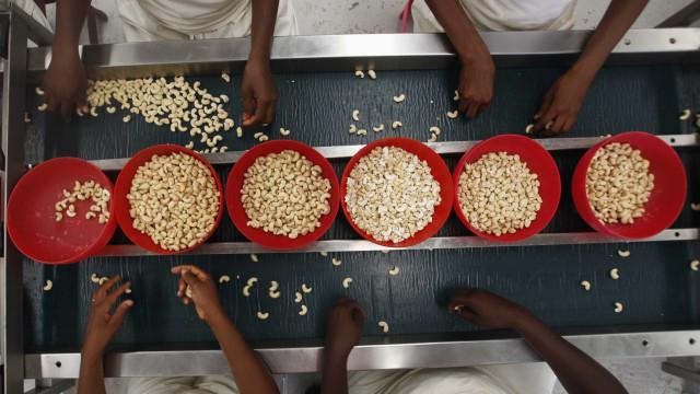 """""""Governo guineense eliminou barreiras à exportação de caju"""""""