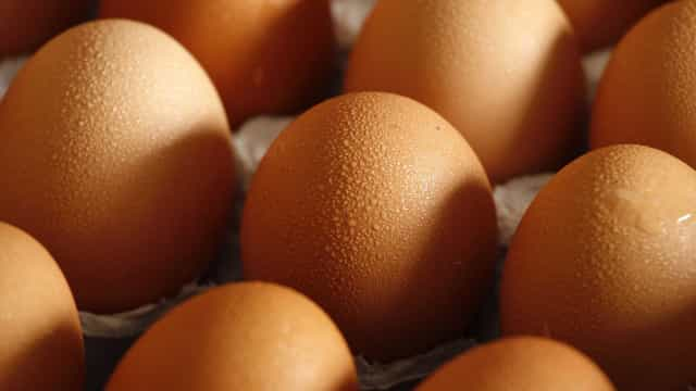 Cinco empresas francesas afetadas com ovos contaminados com Fipronil